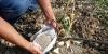 coltivazione-erbacee-2018-1D6BB262E-72CF-7244-20BC-E465A7BD3FB2.jpg