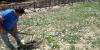 coltivazione-erbacee-2018-338A49D3A-AE42-0B00-5188-C27E98B9725B.jpg