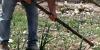 coltivazione-erbacee-2018-5EE6B6816-BD52-FABF-FCA1-C33792C96F2D.jpg
