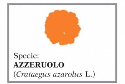 Azzeruolo